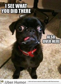 I see what you did there.. | Funny Pictures, Quotes, Pics, Photos, Images. Videos of Really Very Cute animals.