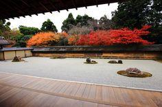 京都 龍安寺 石庭 紅葉 Japan,Kyoto,Ryoan-ji temple,autumn leaves,colored leaves