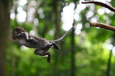 The monkey forest- Ubud, Bali.