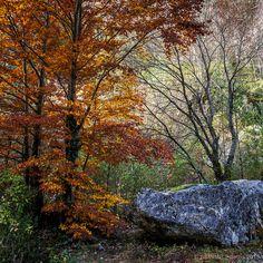 SantiMB.Photos: El haya y la roca