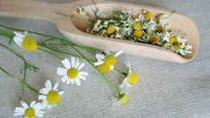 obrázek z archivu ireceptar.cz Ethnic Recipes, Plants, Food, Compost, Flowers, Lawn And Garden, Essen, Meals, Plant