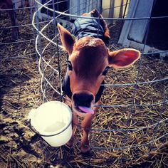 Maybe a cow, this one is adorable.
