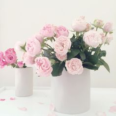My favourite roses in my favourite @marmosetfound vases - available from the studio or online  http://ift.tt/1P2c3UV  #flowers #floralfix #flowersofinstagram  #floral #pretty #thatsdarling  #florist #blooms #ceramics #mybeautifulmess  #flashesofdelight  #lovelysquares  #pink #roses #vscoflowers  #makemondaypretty  #slowfloralstyle  #stylingtheseasons  #floralfridaycompetition  #petalsandprops #softdreamyphotography #floralperfection