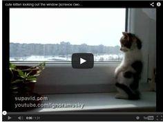 二本足で立っている猫動画。 | @Atsuhiko Takahashi (アットトリップ)  (via http://attrip.jp/124941/ )