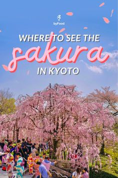 Although the best places to see cherry blossoms in Japan are often a topic of debate amongst many, Kyoto is one of the most popular cities in Japan for celebrating and picnicking, and cherry blossom trees in Kyoto can be found across the city. Here are some of the best sakura viewing spots in Kyoto! 🌸#JapanByFood#Japan#JapanTravel#TravelJapan#JapaneseFood#JapaneseCulture#JapanEats#Wagashi#JapanFood #Sakura #CherryBlossoms #Tokyo #Kyoto #Osaka #Spring #VisitJapan #TraveTips… Cherry Blossom Japan, Cherry Blossoms, Japan Destinations, Tokyo City, Visit Japan, Blossom Trees, Kyoto Japan, Japanese Culture, Japan Travel