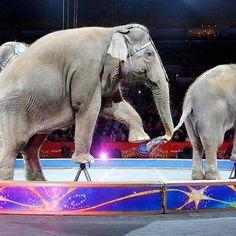 Ringling Bros. elephants officially retire http://shot.ht/1WD4fzc @EW