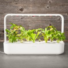 Click and Grow Smart Garden, 9-Pod