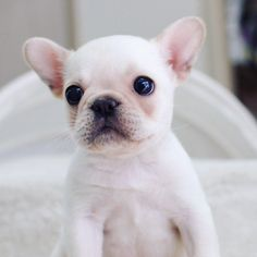 glamour shot don't mind the nakedness! by tokkithefrenchie http://ift.tt/1r6H18X