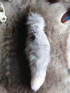 https://www.etsy.com/listing/158719024/ice-blue-wearable-platinum-fox-tail?  Fox tail keychain for sale