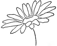 Year 3 Step 08 daisies Drawing the Daisy : How to Draw Daisies with Easy Step by Step Lessons Flower Drawing Tutorials, Drawing Projects, Drawing Lessons, Art Lessons, Daisy Drawing, Daisy Painting, Painting & Drawing, Drawing Flowers, Flower Drawings