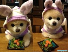 Patiently Waiting To Eat #humor #lol #funny