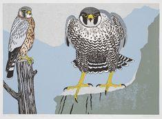 Robert Gillmor, Painters and Printmakers | Pinkfoot Gallery, Cley Norfolk.