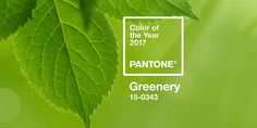 Greenery, color of 2017