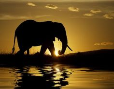 African elephant in silhouette at sunrise, Kenya, Africa - beautiful elephant - Animal Pictures, Cool Pictures, Cool Photos, Beautiful Pictures, Elephant Pictures, 2 Photos, Amazing Photos, Most Beautiful Animals, Beautiful Creatures