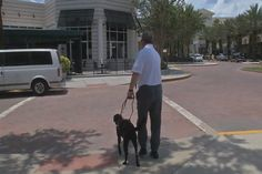 Fake service dogs no liable for jail time-service-dog-blind-disabilities-law-070115