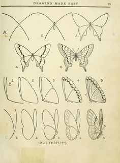 Butterfly Wings by E.G. Lutz...Drawing Made Easy 1935