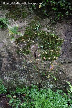La poda es esencial si queremos que nuestra planta crezca frondosa y no excesivamente espigada. ¡Porque las hortensias son HERMOSÍSIMAS!