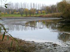 Európa legnagyobb mesterséges tavát csapolták le, kezdődnek a gyalogos Téli mocsár túrák, www.tavitura.hu.