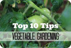 Top 10 Tips @L Mahaffey Miley Gardening on time2saveworkshops.com #gardening #diy