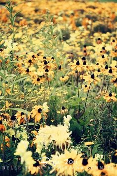 how pretty. black-eyed susans are some of my favorites