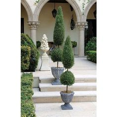 "48"" Classic Topiary Tree Collection - Small. Dense, faux evergreen foliage fools the eye in these hand-crafted, everlasting topiaries that never need to be watered or pruned! Our ""Classic"" topiary boasts a legendary tapered shape. #topiary"
