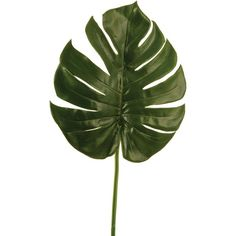 Linea Philo leaf branch ($7.58) ❤ liked on Polyvore featuring home, home decor, floral decor, fillers, plants, flowers, backgrounds, green, home & furniture and flower stem