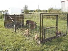 Super-Efficient Outdoor Oven and Portable Pig Pen for Pastured Swine - Animals - GRIT Magazine Pig Shelter, Agriculture, Farm Show, Pig Farming, Farming Ideas, Backyard Farming, Chickens Backyard, Pig Pen, Diy Vintage