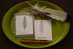 Parts of a Feather - Feather lesson found in Week 11 Day 5 on JustMontessori.com