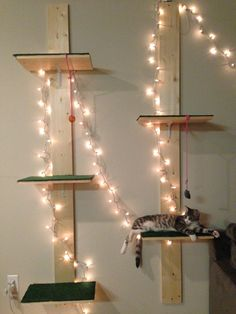 DIY cat shelves! Very easy. Just find rectangles big enough for your cat, carpet them, and attach them to long planks! This is great because only two screws need to go in the wall. Add Christmas lights for effect!