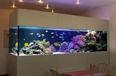 Saltwater Aquarium Fish - Find incredible deals on Saltwater Aquarium Fish and Saltwater Aquarium Fish accessories. Let us show you how to save money on Saltwater Aquarium Fish NOW! Diy Aquarium, Aquarium Design, Aquarium Mural, Aquarium Terrarium, Saltwater Aquarium Fish, Saltwater Tank, Marine Aquarium, Freshwater Aquarium, 180 Gallon Aquarium