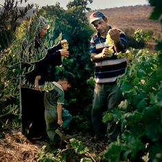 The Palestine that Isn't In the Headlines - NPR. Kaufman's poetic photos of life in Wadi Fuqin are not about conflict, though. They are informed by his personal desire for harmony, and his quest to simply document a place as it evolves.