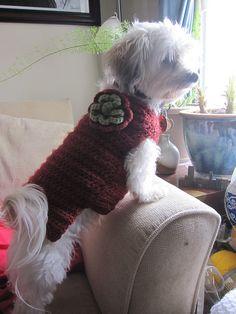 Ravelry: Flower Garden Dog Sweater pattern by Lion Brand Yarn