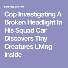 A deputy dropped off his squad car at the local mechanic's shop, and shortly after, he was told some very surprising news: he had a case of squirrels! Awesome Stories, Mechanic Shop, Investigations, Squad, Automobile Repair Shop, Study, Layering