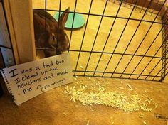 """I was a bad bun. I chewed up the new doors Dad made me. I'm not sorry!"""