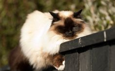 Success! New Zealand Domestic Cats Won't Be Trapped and Killed. Signing a petition CAN make a difference.