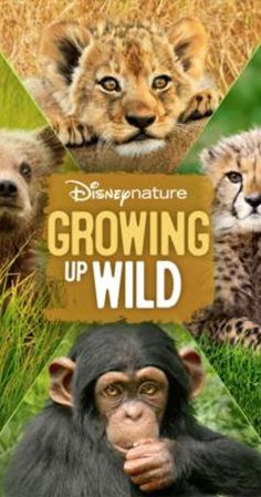 """Directed by Mark Linfield, Keith Scholey.  With Daveed Diggs. Life is an adventure - especially for a newborn animal who has so much to learn. """"Growing Up Wild"""" takes audiences to the wildest corners of the planet to tell the tales of five courageous animals as they tackle the very first challenges of their young lives. With a little guidance from sage family members, each must figure out how and where to find food, while learning to recognize the very real..."""