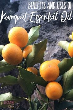 Kumquat Essential Oil Benefits and Uses
