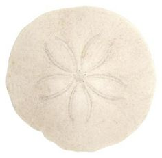 How to Seal a Sand Dollar