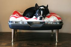 Love the suitcase bed.  Love the precious pup.