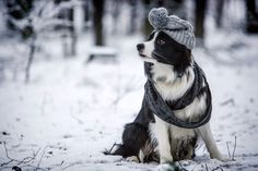 Winter with a Border Collie :D