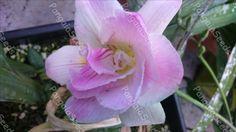 Variety of Seeds&Bulbs. Bulbs, Seeds, Packaging, Rose, Flowers, Plants, Lightbulbs, Pink, Florals