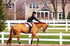 that-horseshow-life:  pets for the perfect girl baysandbows is super talented & took this amazing picture