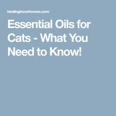 Essential Oils for Cats - What You Need to Know!