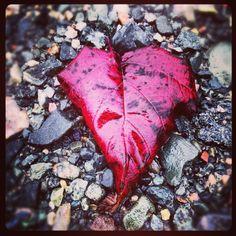 De l'amour on en trouve partout... Il suffit de s'arrêter