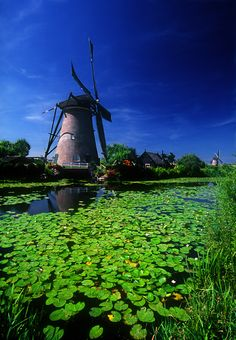 ©2008 Bruce Muirhead Windmill and lily pads, Kinderdjik, Netherlands
