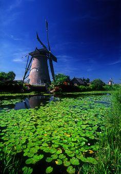 ©2008 Bruce Muirhead ~ Windmill and Lily Pads, Kinderdjik, Netherlands