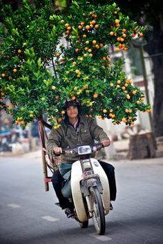 Heavy laden motorbike with cumquat tree for TET