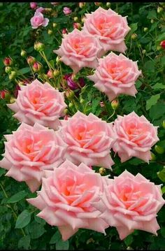 Absolutely beautiful bunch of roses