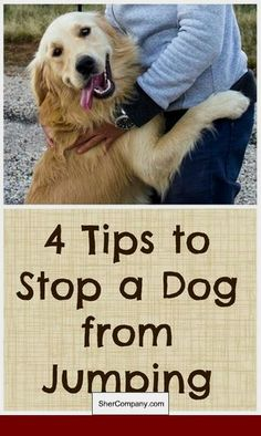 How To Train A 1 Year Old Rescue Dog #dogtraining #dogobediencetraining