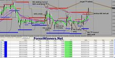 100 Profit trading system   Forex Winners   Free Download